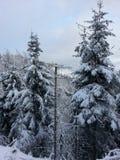 черный голубой пейзаж фото footway тонизировал белые древесины зимы стоковая фотография rf