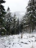черный голубой пейзаж фото footway тонизировал белые древесины зимы стоковое фото rf