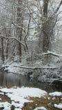 черный голубой пейзаж фото footway тонизировал белые древесины зимы Стоковые Изображения RF