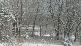 черный голубой пейзаж фото footway тонизировал белые древесины зимы Стоковое Изображение