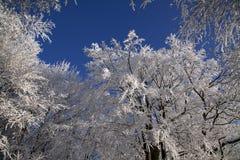 черный голубой пейзаж фото footway тонизировал белые древесины зимы Стоковое Изображение RF