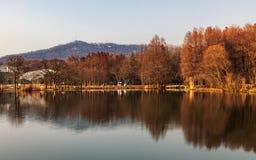 черный голубой пейзаж фото footway тонизировал белые древесины зимы стоковое фото