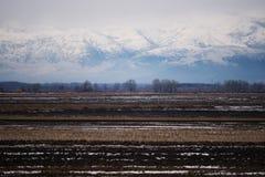 черный голубой пейзаж фото footway тонизировал белые древесины зимы Стоковая Фотография