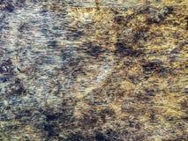 Черный грибок на деревянной панели стоковое изображение rf