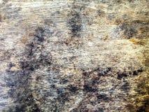 Черный грибок на деревянной панели стоковые изображения