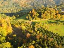 Черный лес на осени Стоковая Фотография