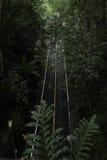Черный лес дороги Стоковая Фотография RF