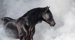 Черный жеребец Pura испанский в светлом дыме стоковое фото rf