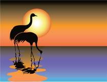 черный заход солнца цапли Стоковые Фото