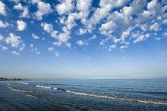 черный индюк моря Стоковая Фотография