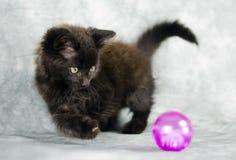 Черный длинный котенок волос играя с розовым шариком Стоковое Изображение RF