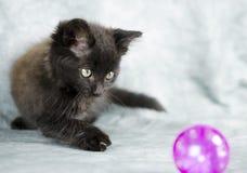 Черный длинный котенок волос играя с розовым шариком Стоковые Фотографии RF