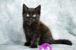 Черный длинный котенок волос играя с розовым шариком Стоковое фото RF