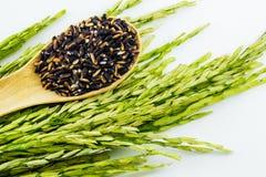Черный липкий рис в деревянных ложке и неочищенных рисах Стоковые Фото