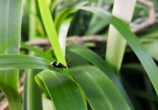 Черный и желтый striped жук с красной головой Зеленая предпосылка стоковые фотографии rf