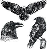 Черный комплект значка эскиза вектора птицы ворона Иллюстрация штока