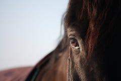 Черный конец глаза лошади вверх Стоковые Изображения