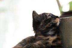 Черный коричневый котенок лежит вниз на поле и полагается к конкретному поляку смотря к небу Стоковые Изображения RF