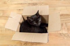 Черный котенок в коробке Стоковое Изображение