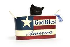 Черный котенок в 4-ом из контейнера в июле Стоковое Фото