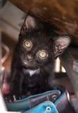 Черный котенок в полке ботинка Стоковые Фото