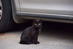 Черный котенок в улице Стоковые Фотографии RF