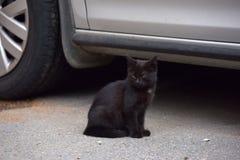 Черный котенок в улице Стоковые Изображения