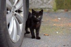 Черный котенок в улице Стоковое Изображение