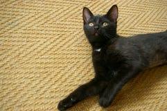 Черный котенок лежа на ковре Стоковые Фото