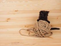Черный котенок играя с шариком на деревянной предпосылке стоковые изображения rf