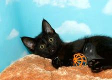 Черный котенок играя с шариком Стоковое Изображение