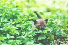 Черный котенок на заводе Стоковые Изображения RF