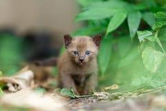 Черный котенок на заводе Стоковое Изображение