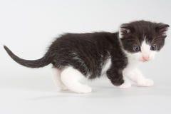 черный котенок пола стоя бел Стоковое Фото