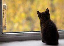 Черный котенок сидя окном Селективный фокус стоковое изображение