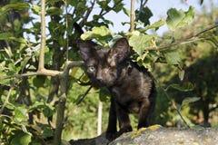 Черный котенок с одним глазом Стоковые Фото