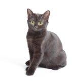 Черный котенок стоковая фотография