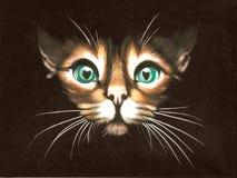 Черный кот бархата Стоковое Фото