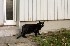 Черный кот вне деревянного дома стоковое фото