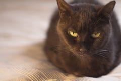 черный кот вниз лежа Стоковые Фото