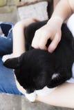 Черный кот в руках Стоковые Изображения