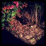 Черный кот в темноте Стоковая Фотография