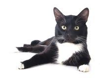 Черный кот в шляпе Стоковые Фотографии RF