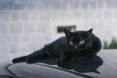 Черный кот лежа на автомобиле Стоковая Фотография RF