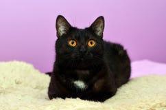 Черный кот лежа на кровати в комнате Стоковое Изображение