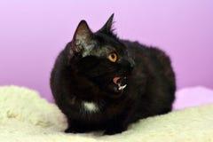 Черный кот лежа на кровати в комнате Стоковые Фотографии RF