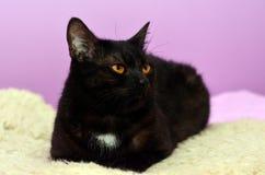 Черный кот лежа на кровати в комнате Стоковые Фото