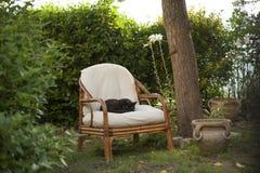 Черный кот заискивал на кресле Стоковое Фото