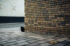 Черный кот за кирпичной стеной на улице в Брюгге, Бельгии Стоковая Фотография