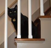 Черный кот играет взгляд украдкой шиканье через Banister Стоковые Изображения